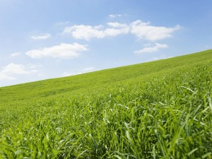 green-grassland-under-sky-photo-010