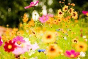 vivid_flowers-1920x1080-400x270-MM-100